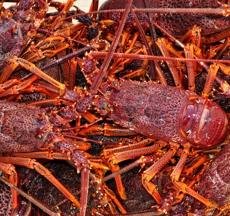 Rock Lobster Fishery